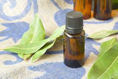 Bay leaf essential oil Royalty Free Stock Image