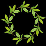Bay Leaf Garland Royalty Free Stock Images