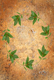 Bay Leaf Garland Stock Photo