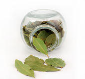 Bay leaf and glass Royalty Free Stock Photography