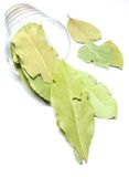 Bay leaf in a glass Royalty Free Stock Images