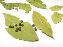 Bay leaf in a glass Royalty Free Stock Photography