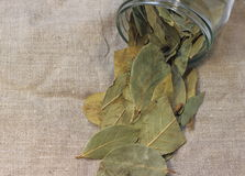 Bay leaf Royalty Free Stock Image