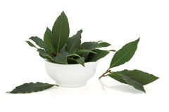Bay Leaf Herb Stock Photography