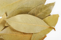 Bay leaf herb Royalty Free Stock Image