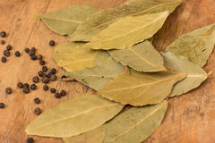 Bay leaf herb Royalty Free Stock Photos