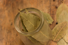 Bay leaf herb Stock Images