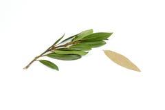 Bay leaf herb spice Stock Image