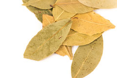 Bay leaf herb on white Stock Images