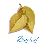 Bay leaf icon with text Royalty Free Stock Photos