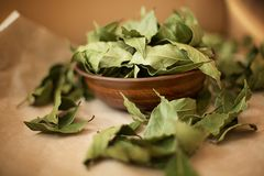 Free Bay Leaf In A Wooden Cup Stock Images - 108776534