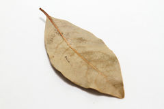 Bay leaf isolated Royalty Free Stock Photos