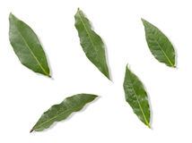 Bay Leaf Stock Images