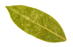 Bay leaf isolated Stock Photo