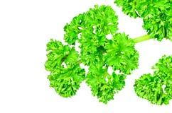 Bay leaf parsley. Stock Photo