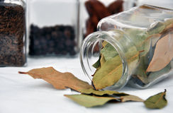 Bay leaf. And glasses of spice Royalty Free Stock Images