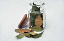 Bay leaf in a glass. Bay leaf on a white background Royalty Free Stock Photo