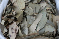 Bay leaf Royalty Free Stock Images