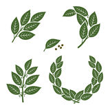 Bay leaf set. Vector Royalty Free Stock Photo