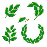 Bay leaf set. Vector Stock Photography