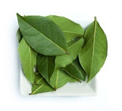 Bay leaf spice Stock Photography