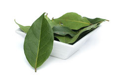 Bay leaf spice. In a bowl on white background Stock Photos