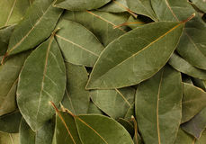 Bay leaf spice. Green bay leaf spice closeup view background Royalty Free Stock Photo