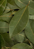 Bay leaf spice Royalty Free Stock Photos