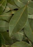 Bay leaf spice royalty free stock photos
