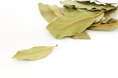 Bay leaf spice on white background. Close up of several leaves of bay leaf spice on white background royalty free stock image