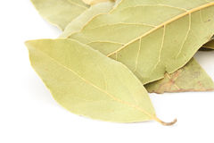 Bay leaf spice on white background. Close up of several leaves of bay leaf spice on white background royalty free stock photos