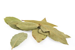 Bay leaf on white background Royalty Free Stock Image