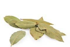 Bay leaf on white background. Bay leaves on white background Royalty Free Stock Image