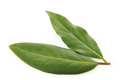 Bay leaf Royalty Free Stock Photo