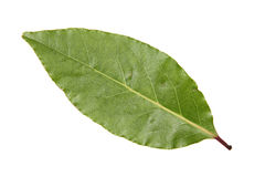 Bay leaf on a white background Stock Photography