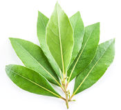 Bay leaf on the white background. stock images