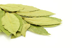 Bay leaf on white Stock Images