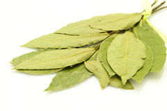 Bay leaf on white Royalty Free Stock Photo