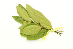 Bay leaf on white Royalty Free Stock Photography