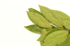 Bay leaf on white Stock Photography