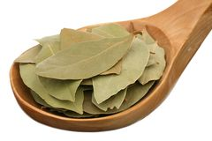 Bay leaf in a wooden spoon Royalty Free Stock Photography