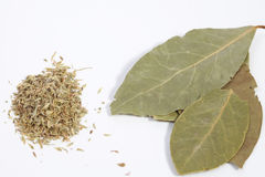 Bay leafs Stock Images