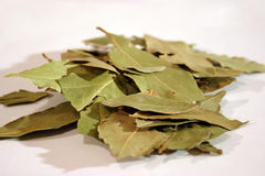 Bay leafs. Spices - Dried bay leafs royalty free stock photos