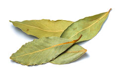 Bay leafs. Close up white isolated Royalty Free Stock Photography