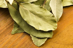 Bay leafs Royalty Free Stock Images