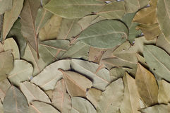 Bay leaves. (laurus nobilis) background Royalty Free Stock Image