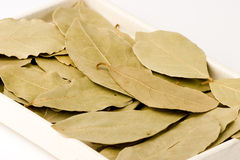 Bay leaves. Close-up, Studio Shot Stock Images