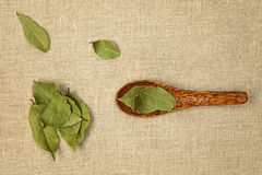 Bay leaves. Bay leaves on wooden spoon on natural background - top view royalty free stock photos
