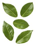 Bay Leaves. Isolated on a white background. Isolation is on a transparent layer in the PNG format stock photo