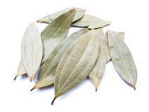 Bay Leaves. Some dried bay leaves isolated on white royalty free stock images